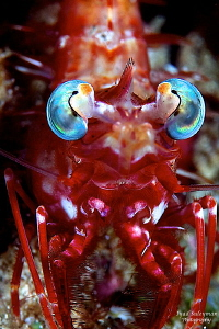 Shrimp Portrait by Iyad Suleyman 
